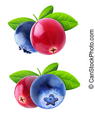 Isolated cranberry and blueberry - Isolated berries. Two...