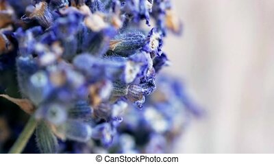 purple flowers lavender - Dried purple flowers lavender...