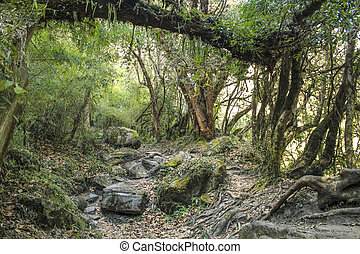 annapurna trail in Nepal with scenic trees, roots and...
