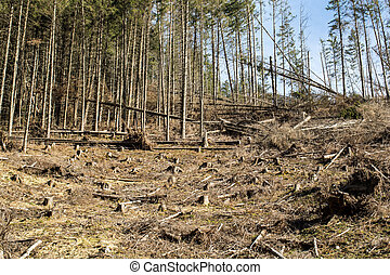 Forest being cut down turning into a dry lifeless field