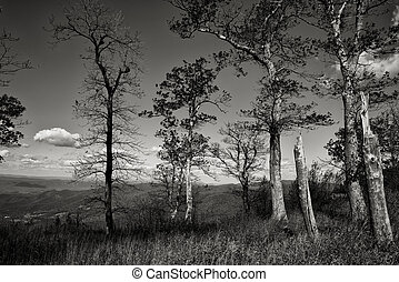 Blueridge black and white trees - A view looking out from...