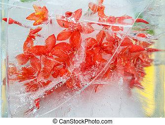 Flowers in ice - Red flowers frozen in ice