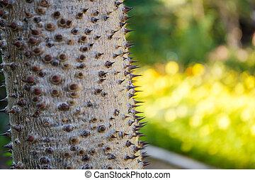 Tree trunk thorny of bombax ceiba tree background