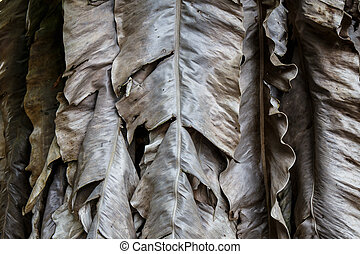 Dried banana leaves