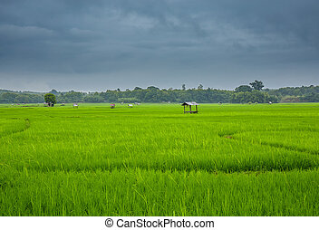 Landscape rice field in Nan,Thailand