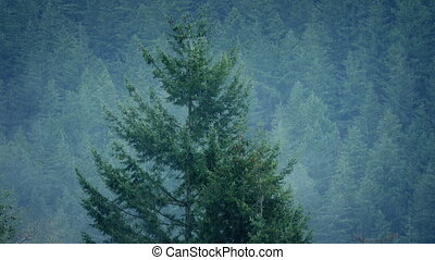 Misty Forest In Rainfall - Rugged mountain forest in the...