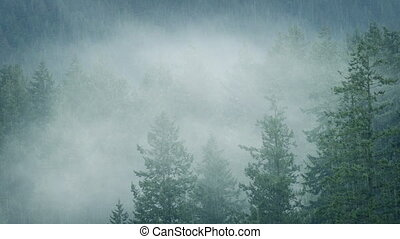 Rain And Mist In Wilderness Forest - Rainfall in the forest...
