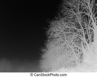 Infrared type image of rural trees taken early winter foggy...
