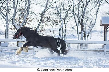 Running Horse in winter farm