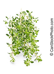 Fresh thyme on white background - Fresh green thyme closeup...