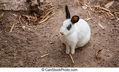 White Rabbit black eye sitting on the floor.