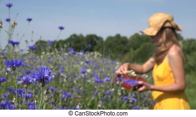 Blue cornflower blooms and blurred herbalist woman gather herbs.