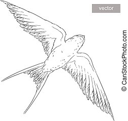 fly swallow bird in the sky realistic wings. Vector.