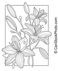 Lily flowers coloring book vector illustration