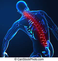 3d render of a medical image of a male figure with spine...