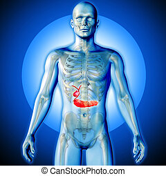 3D render of a medical image of a male figure with biliary...