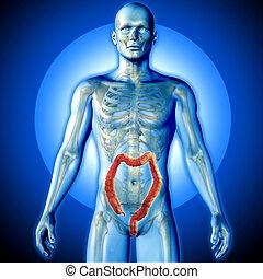 figura,  render, medico, evidenziato, due punti, maschio, immagine,  3D