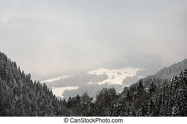 Swiss Alps near Davos, Switzerland. Snow-covered fir trees