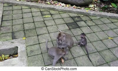 Caring mother of a young monkey in tropical forest in...