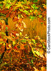 small autumn oak tree