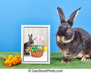 On a light background bunny sitting near photograph in...