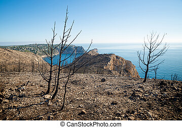 Forest fire aftermath - Aftermath of the devastating forest...