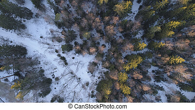 camera looking straight down over winter fir forest in...