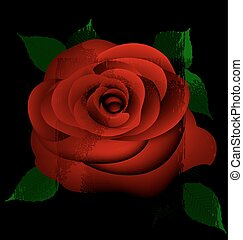 abstract red rose - black background and red-colored fantasy...
