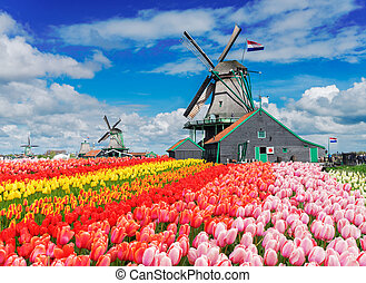 Dutch wind mills - two traditional Dutch windmills with...