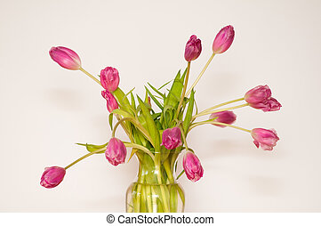 beautiful pink tulips - pink tulip bouque on a white...