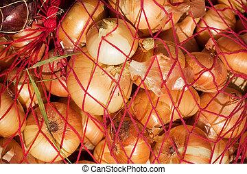 harvested onion