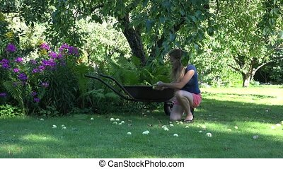 Gardener girl gathering windfall rotten apples fruits to...