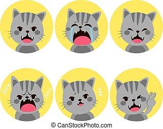 Cat Expressions - Little pet cute grey cat facial...