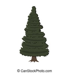spruce, evergreen tree, vector illustration in flat style