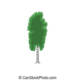 birch tree isolated on white. vector illustration in flat...