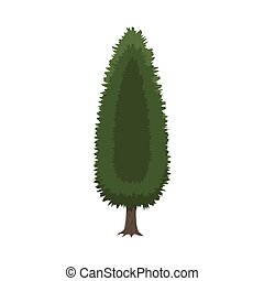Cypress tree isolated on white. vector illustration in flat...