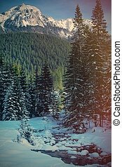 View at winter pine tree forest in mountain