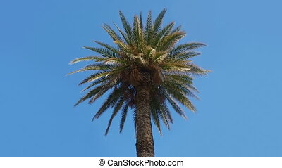 Palm tree on a blue sky - Tropical nature background