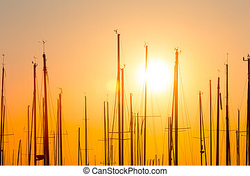 rows of boats mast - rows of boats at pier in the evening...