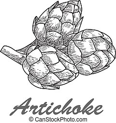 Vector hand drawn artichoke illustration on white background
