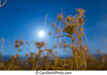 prickly plant at night outdoors