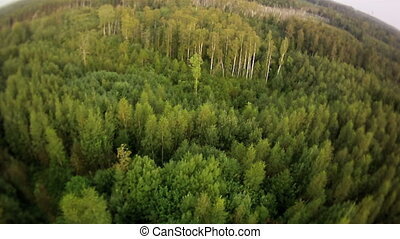 Cut wood aerial view. - Forest with a cut wood part.