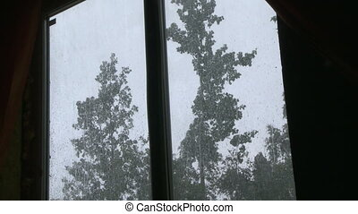 It is raining outside the window. Wet trees swaying in the...
