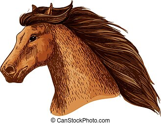 Mare or stallion head, mare with thick mane - Horse or...