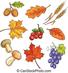 Berries with autumn leaves and mushroom - Autumn fallen...