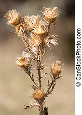 prickly plant with needles in nature