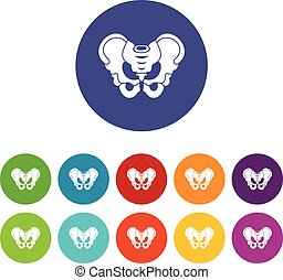 Pelvis set icons in different colors isolated on white...