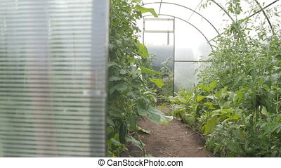A small polycarbonate greenhouse inside, dolly shot