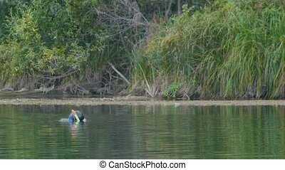 Man swimming and spear fishing in the forest river - floats to the surface