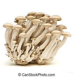 Brown beech fungi - Abstract clump of Brown beech mushrooms...